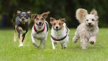 هل تسبب الأوروبيون بزوال الكلاب بأميركا؟