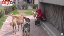 Viewers in tears over heartbreaking Egyptian street child with dogs story