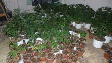 بالصور.. عصابات إسرائيلية تغرق الضفة بالمخدرات