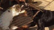 زندہ بلی کتوں کے آگے ڈالنے والوں کو دبئی کے حکمران نے کیا سزا دی؟