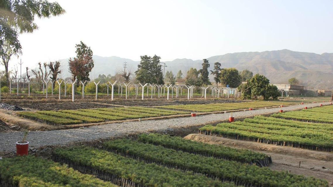A view of a government-run tree nursery in Haripur, in Pakistan's Khyber Pakhtunkhwa province. (Thomsun Reuters Foundation)