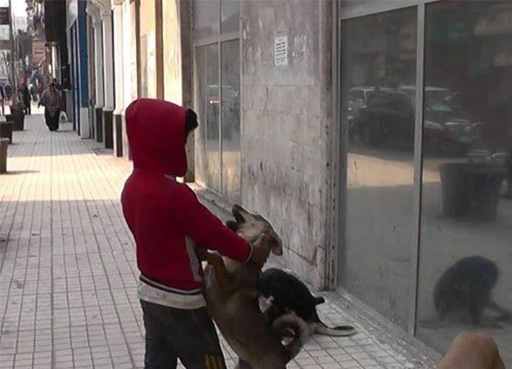 الطفل الراقص مع الكلاب