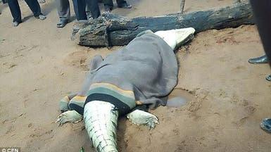 فيديو.. وجدوا بقايا طفلهم في جوف التمساح
