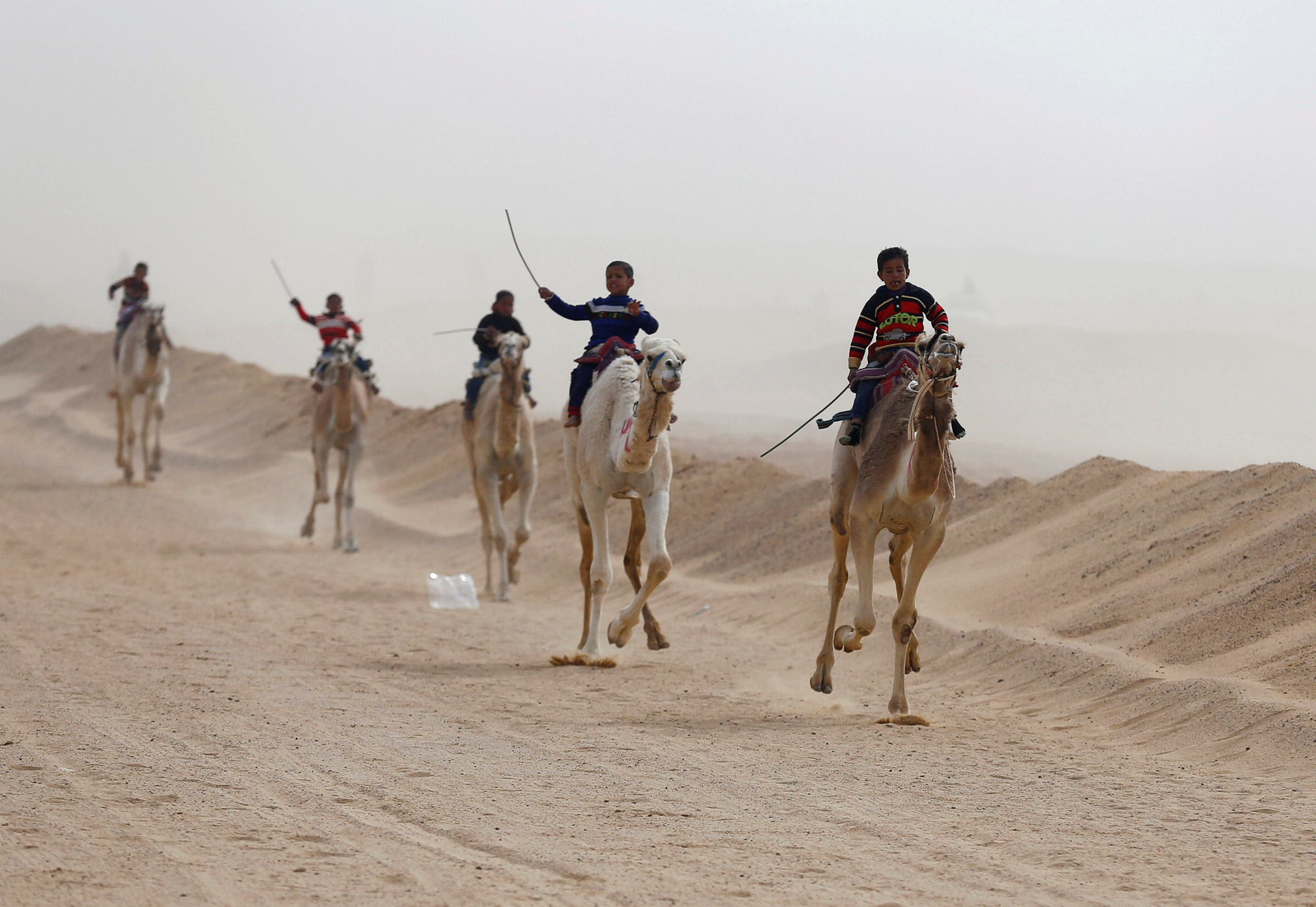 Jockeys, most of whom are children, compete on their mounts during the opening of the International Camel Racing festival at the Sarabium desert in Ismailia, Egypt, March 21, 2017. Picture taken March 21, 2017. reuters