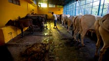 Butcher shops razed amid crackdown on beef in India