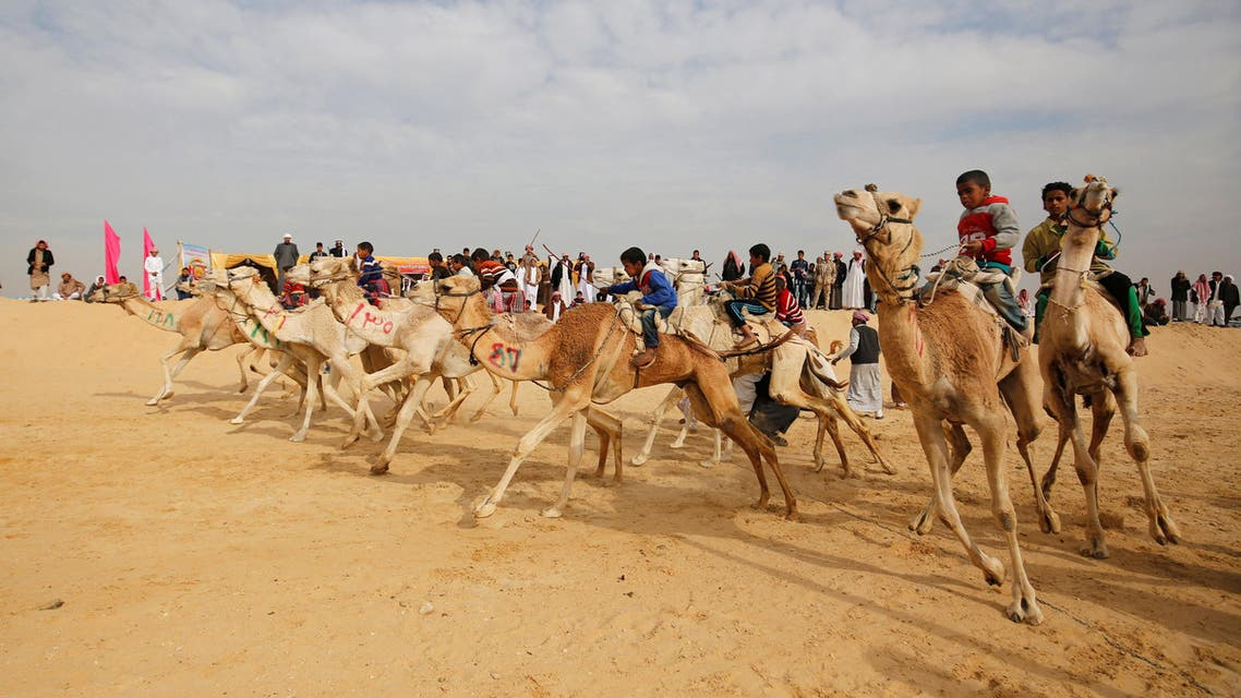 Jockeys, most of whom are children, compete on their mounts at the starting line during the opening of the International Camel Racing festival at the Sarabium desert in Ismailia, Egypt, March 21, 2017. (Reuters)