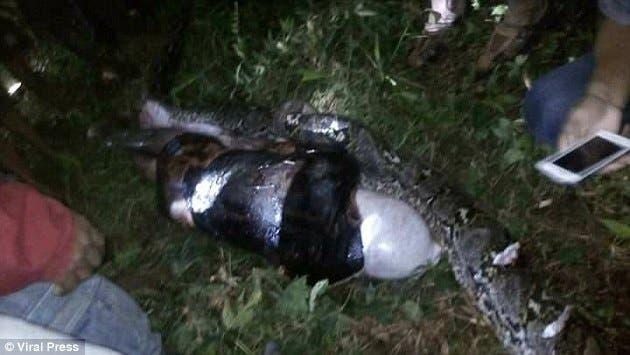نتيجة بحث الصور عن بالصور.. جثَّة شابٍّ كاملة داخل ثعبان