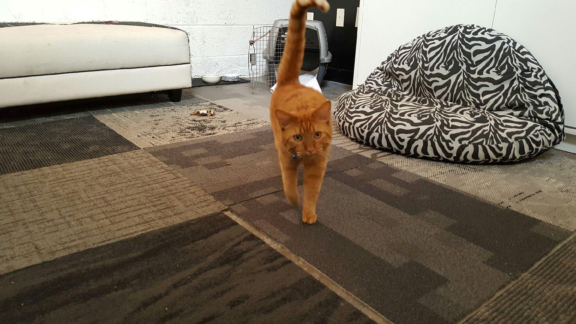 هارفي في مركز لرعاية الحيوانات بعد إنقاذه