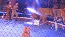 بالفيديو.. أسد يهاجم مدرب سيرك مرتين خلال ثوانٍ
