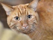 كيف وصل القط هارفي لدالاس التي تبعد 1000 كلم عن منزله؟
