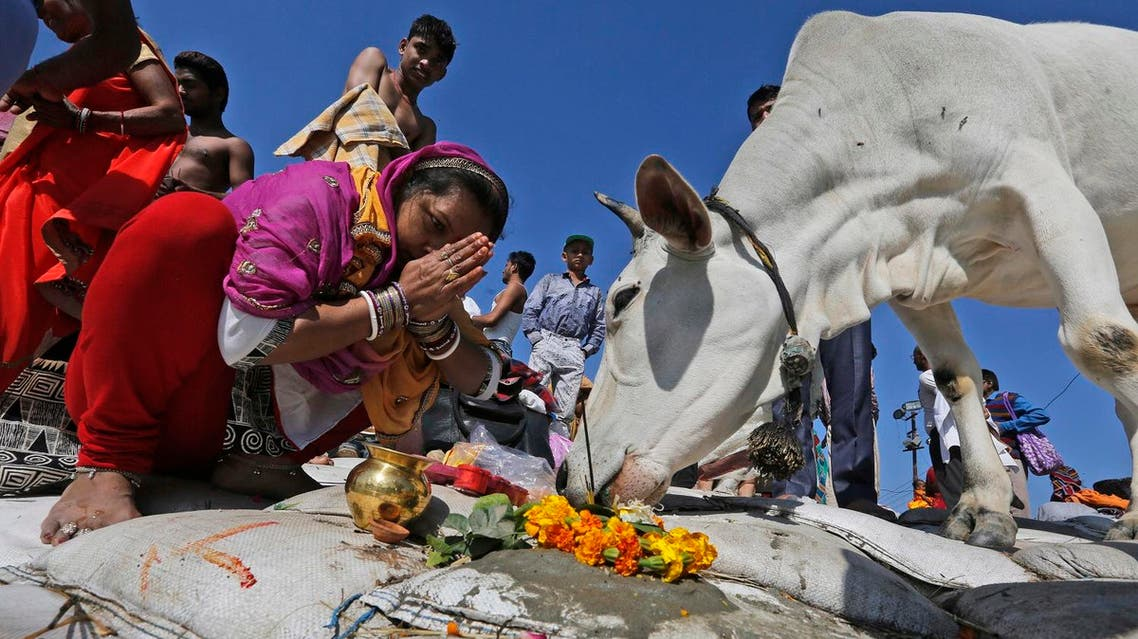 An Indian woman prays to a holy cow in Allahabad, India, on Feb. 24, 2017. (AP)