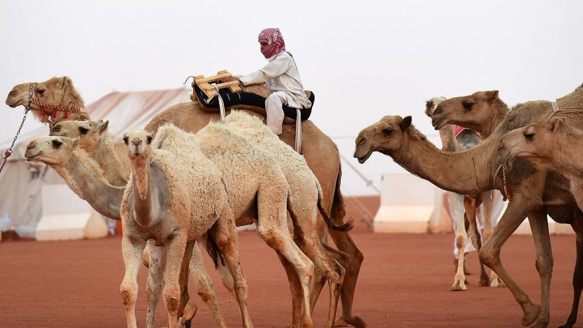 Saudi Arabia's King Abdulaziz Camel Festival AFP