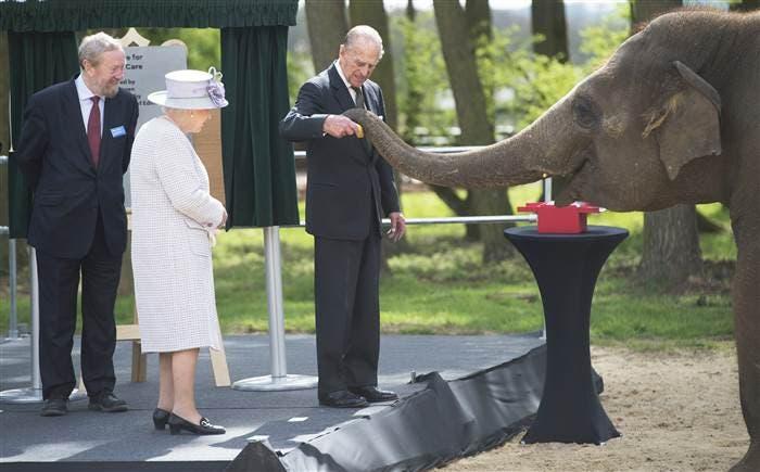 الأمير فيليب زوج الملكة يقدم موزة للفيلة