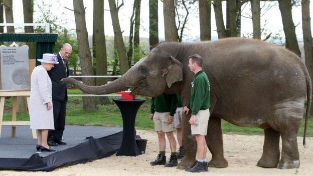 الفيلة تعاملت بود مع ملكة بريطانيا وزوجها
