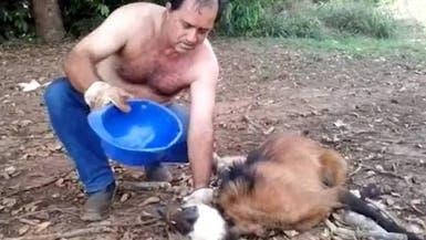 فيديو مذهل.. يسقي ذئباً متوحشاً سقط من شدة العطش