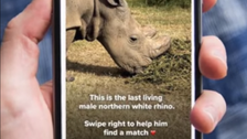A rhino named 'Sudan' has joined Tinder in an effort to find a mate