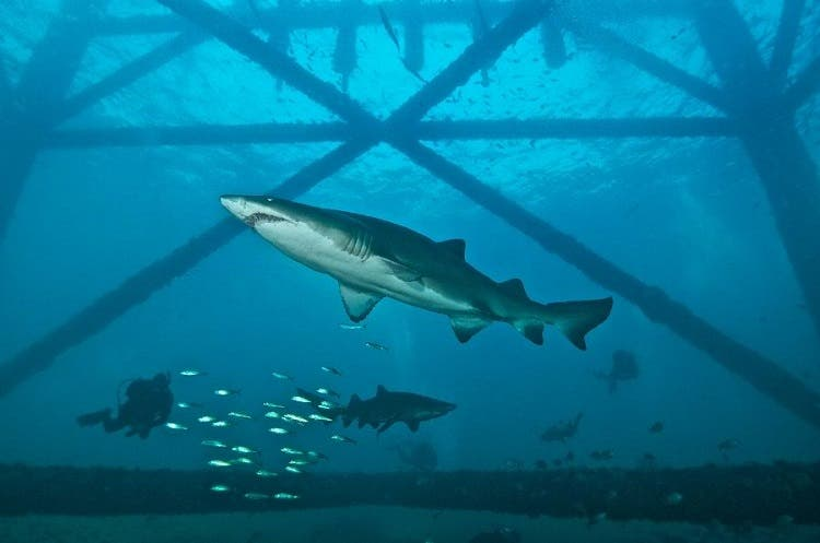 ماهیها در آبهای زیر هتل