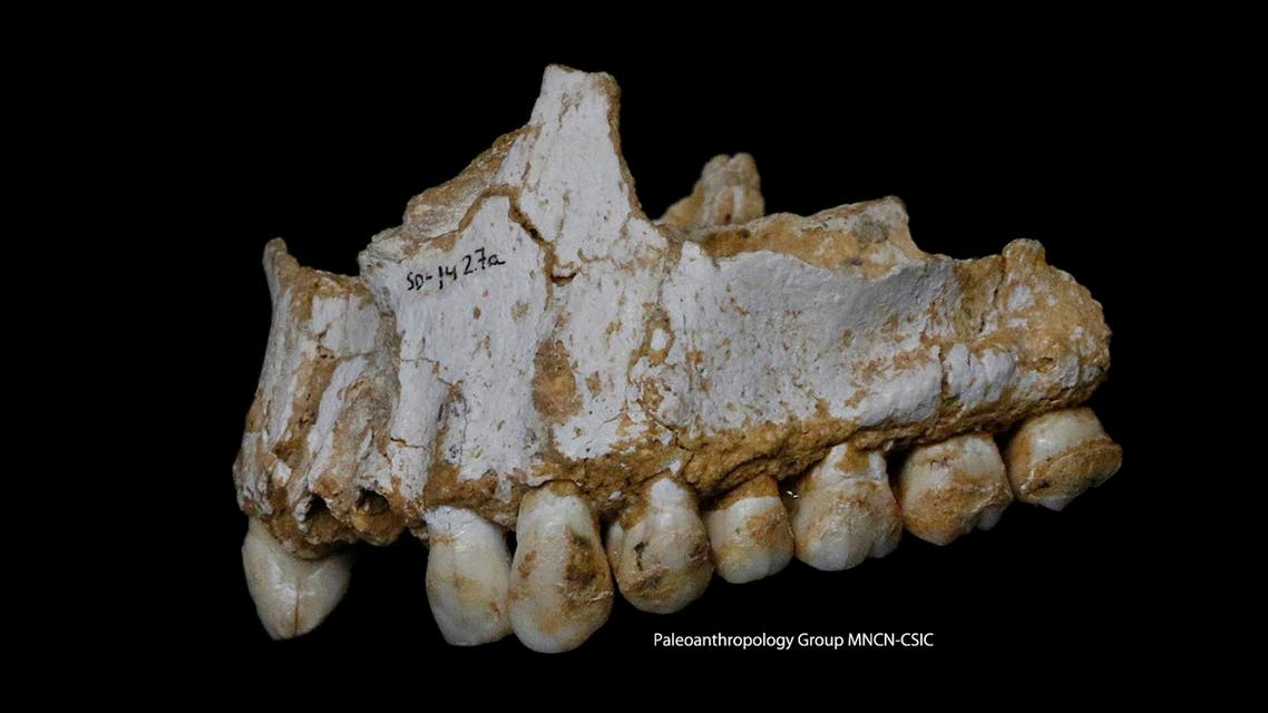 the upper jaw of Neanderthal El Sidron 1, found in what is today Spain. (File photo: AFP)