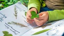 هل تعالج الأعشاب حقا المشكلات المعوية لدى الأطفال؟