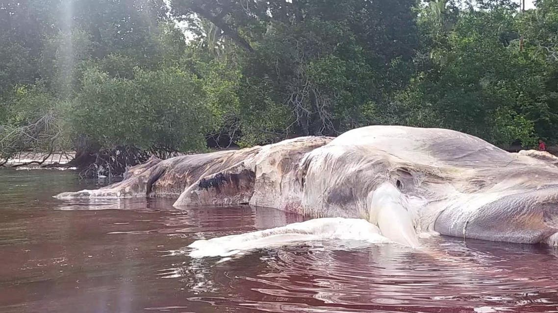 This 49-feet-long creature that washed ashore in Indonesia this week. (Screengrab)