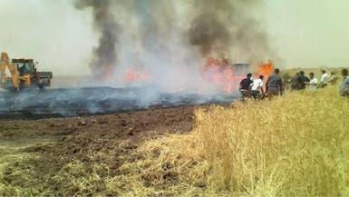 """حقول الحنطة """"تحترق"""" في العراق.. واتهامات لداعش والحشد"""