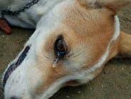 بالفيديو.. دمعة كلب مات مسموماً تكسب تعاطف التونسيين