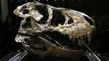 معلومات جديدة مرعبة عن ديناصور ضخم آكل للحوم