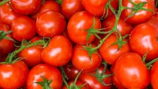 Turkey seeks compromise over Russian ban on its tomatoes