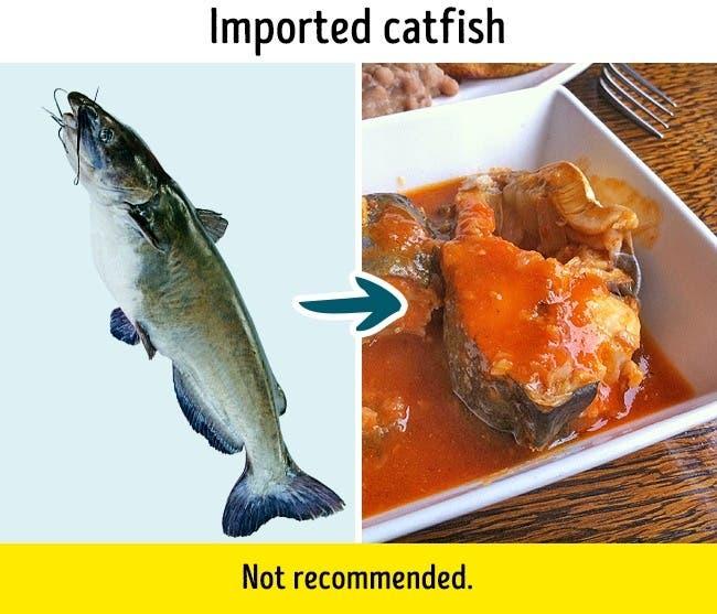 گربه ماهی
