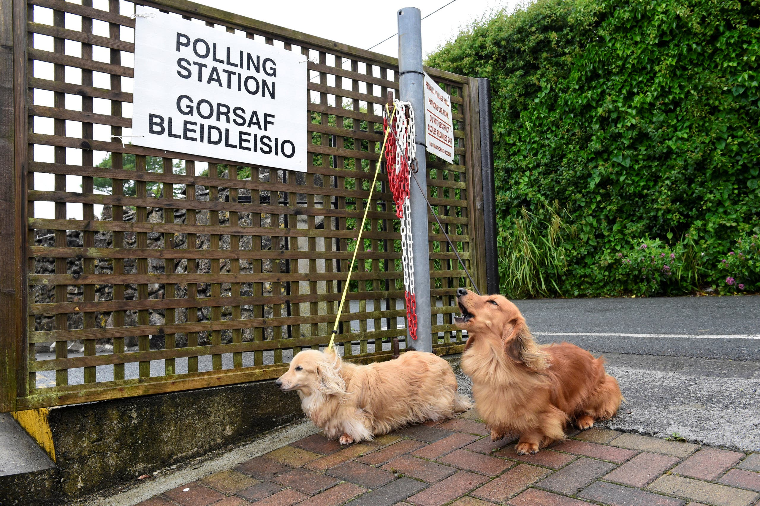 Dogs wait for their owner outside a polling station in Penally, Wales, Britain, June 8, 2017.reuters