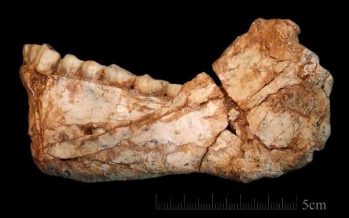اولین فک پایین بزرگسالان تقریبا کامل کشف شده در جبل ارهود