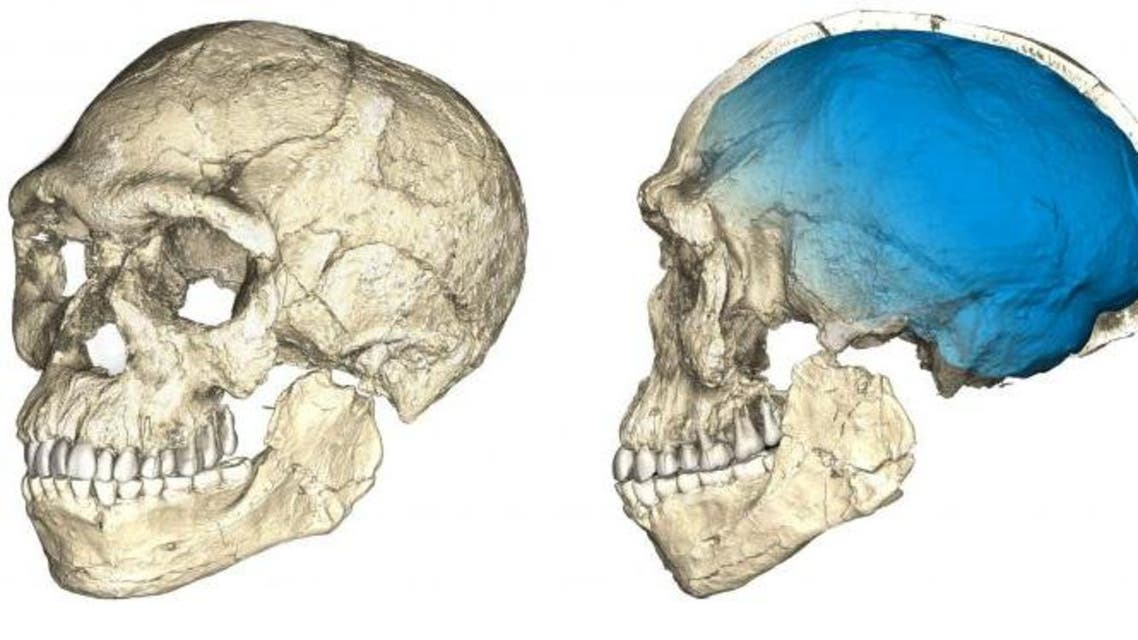 Two views of a composite reconstruction of the earliest known Homo sapiens fossils from Jebel Irhoud in Morocco, based on micro computed tomographic scans of multiple original fossils, are shown in this undated handout photo obtained by Reuters June 7, 2017. (Reuters)