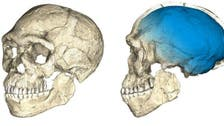 300,000-year-old Moroccan fossils shake up understanding of human origins