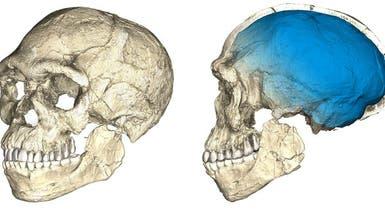 كيف تم اكتشاف أقدم جمجمة إنسان عاقل في المغرب؟