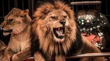 Romania to ban wild animals in circuses