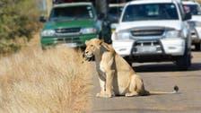 Pakistan arrests man for driving pet lion through Karachi streets