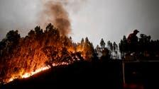 پرتگال کے جنگل میں خوفناک آتشزدگی، ہلاکتوں کی تعداد 43 تک جا پہنچی