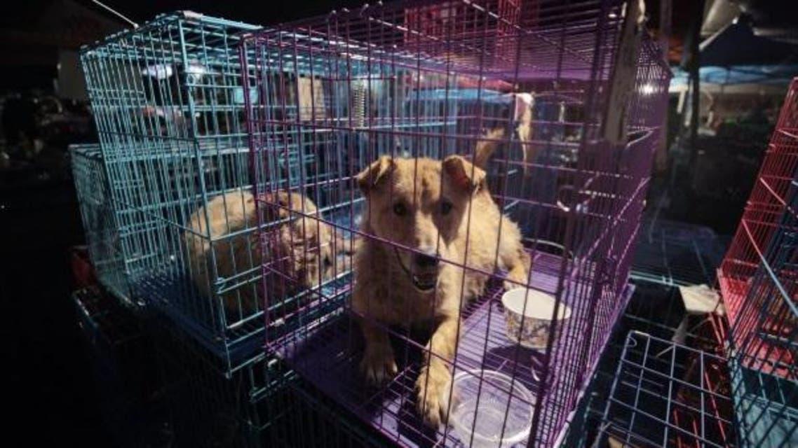 تعرف على أغرب مهرجان صيني لأكل لحم الكلاب