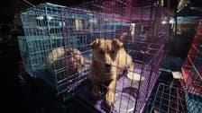 چین میں کتا خوری کا بدنام زمانہ میلہ جاری