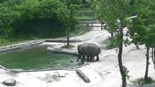 VIDEO: Dramatic moment elephants rescue their baby from a pool