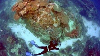 حاجز أستراليا المرجاني يضخ 29 مليار دولار على السياحة