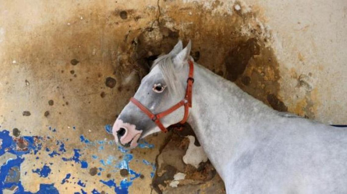 A horse stands in front a bullet-riddled wall at Beirut Hippodrome, Lebanon, April 30, 2017. (Reuters)