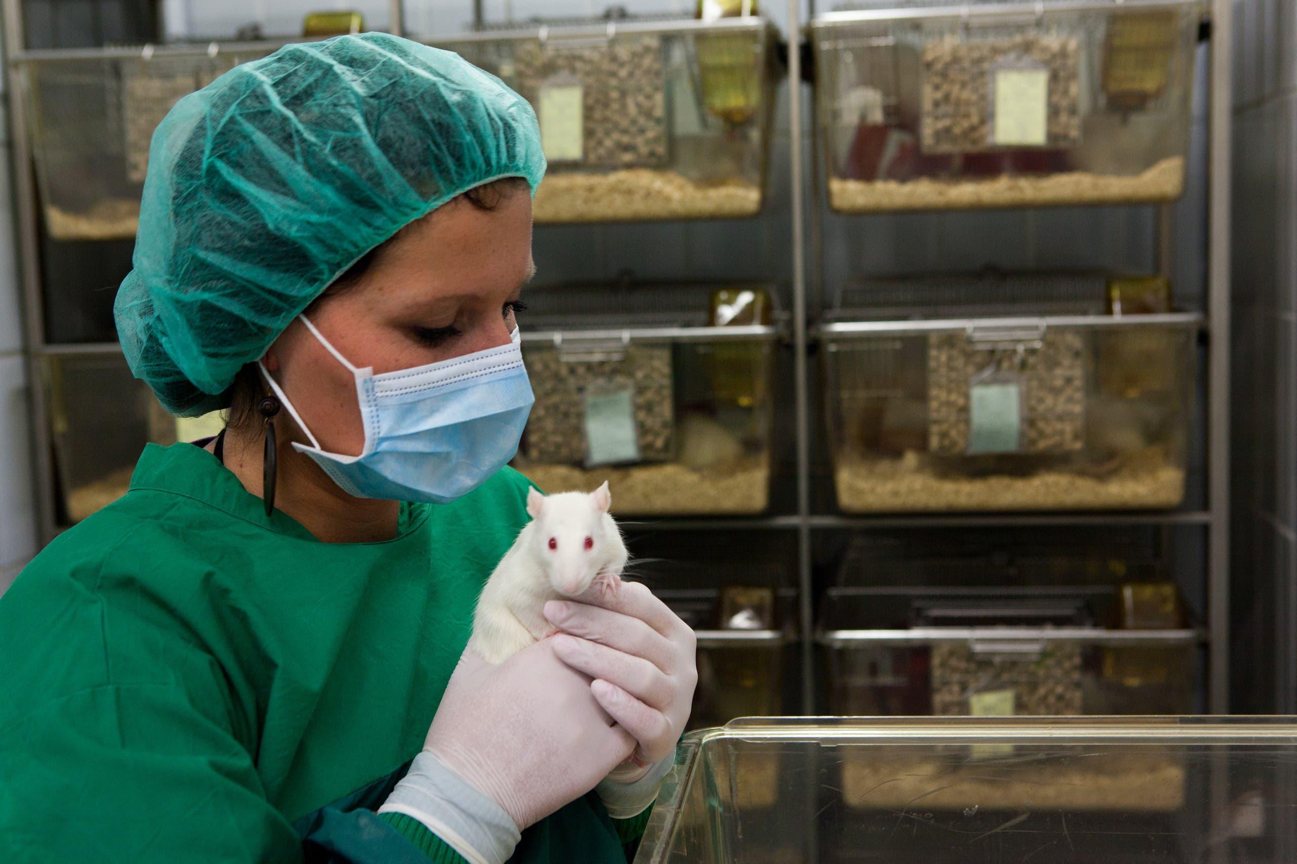 فئران مختبر تجارب (تعبيرية)