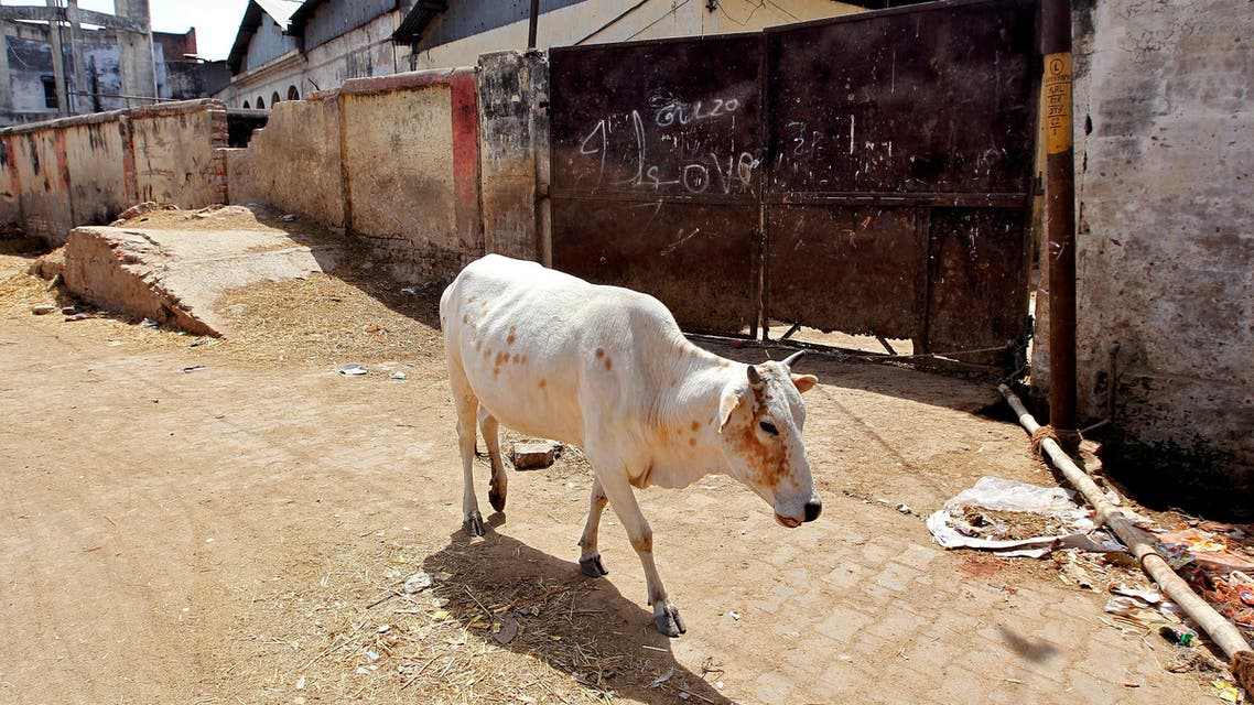 A cow walks past a closed slaughter house in Allahabad, India March 28, 2017. reuters