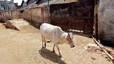 بھارت : ہندو بلوائیوں نے گائے ذبح کرنے پر مسلمان کو تشدد سے مار دیا