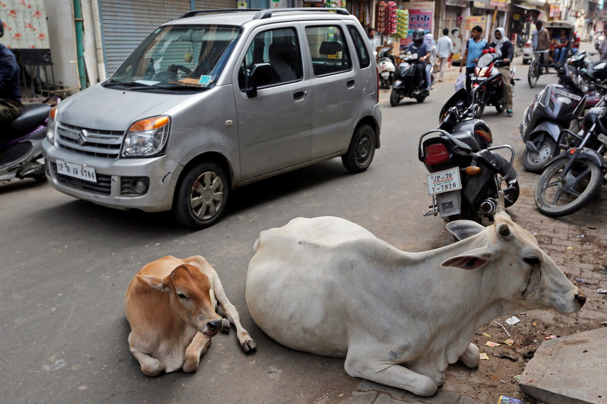 Stray cows rest on a road in Allahabad, India, on May 29, 2017. (AP)