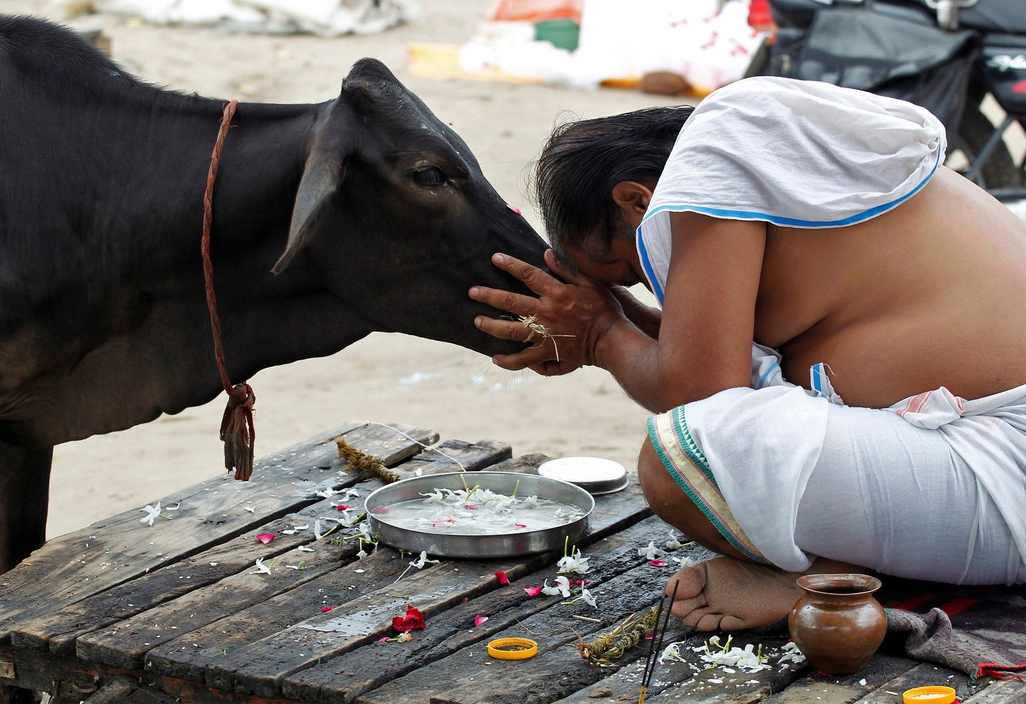 A Hindu devotee offers prayers to a cow in Allahabad, India, September 28, 2016. (Reuters)