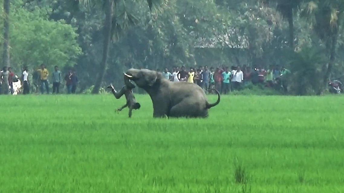 This file photo taken on March 20, 2016 shows an elephant attacking an Indian man in a field in Burdwan district in West Bengal state. (AFP)