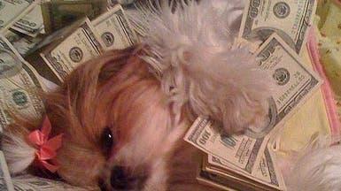 صدق أو لا تصدق.. كلب يتناول بوظة عضوية في جناحه الملكي