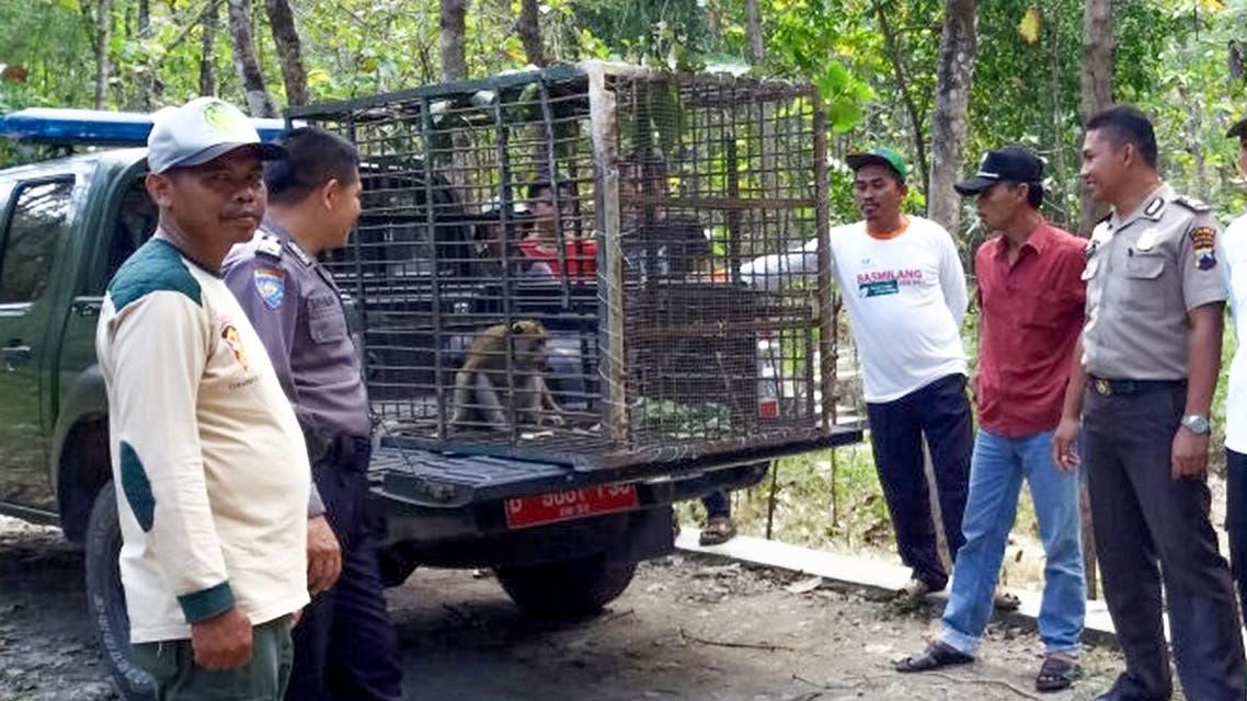 صورة لحراس غابات يضعون قروداً هاجمت سكاناً محليين بقفص في إندونيسيا